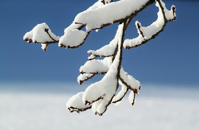 Branch, Winter, Snow, Winter Magic, Snow Magic, White