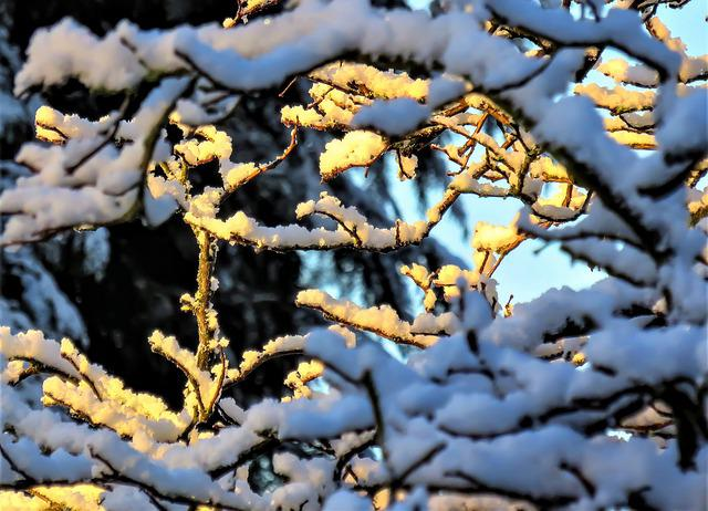Winter, Snow, Snowy Branches, Sunshine, Nature