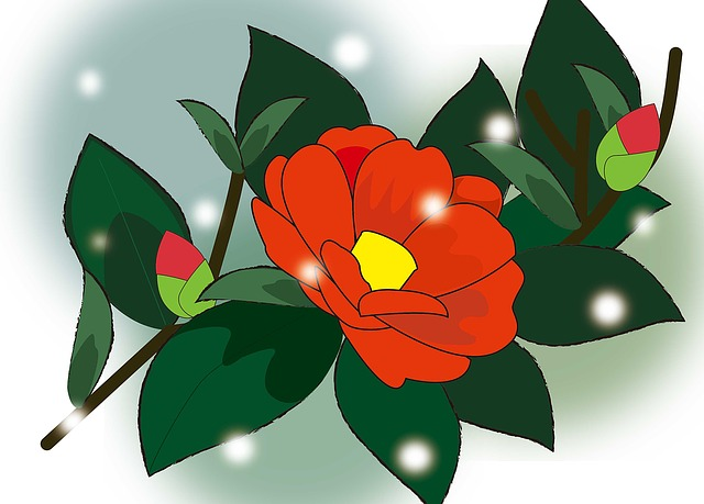 Camellia, Winter, Red, Flowers, Snow