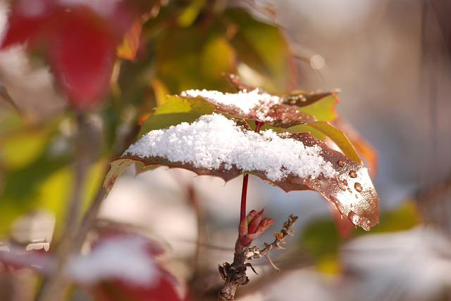 Nature, Leaf, Outdoors, Tree, Season, Snow, Winter, Red