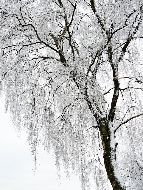 Winter, White, Cold, Snow, Wintry, Snow Magic