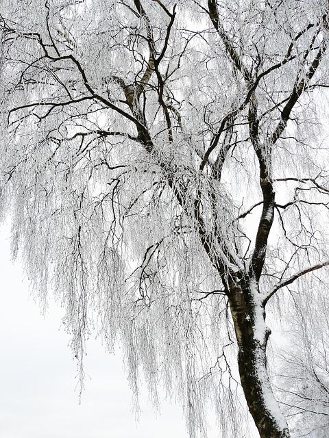 Winter, White, Cold, Snow, Wintry, Snow Magic