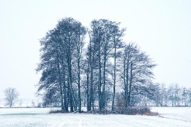 Winter Impressions, Wintry, Snow, Cold, Winter