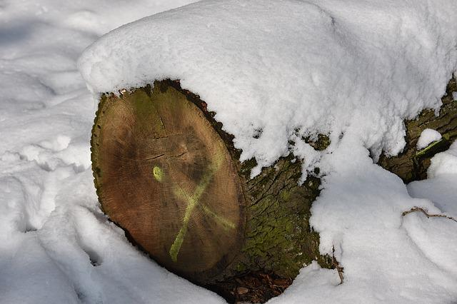 Wood, Tribe, Annual Rings, Snow, Winter