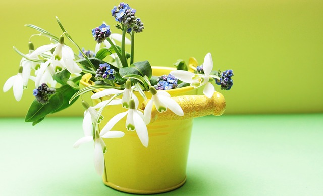 Snowdrop, Forget Me Not, Flowers, Bucket, Yellow, Green