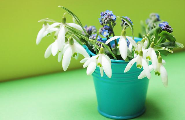 Snowdrop, Forget Me Not, Flowers, Bucket, Petrol, Mint
