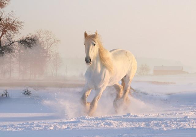 White Horse, Winter, Snow, December, Snowfall, Nature