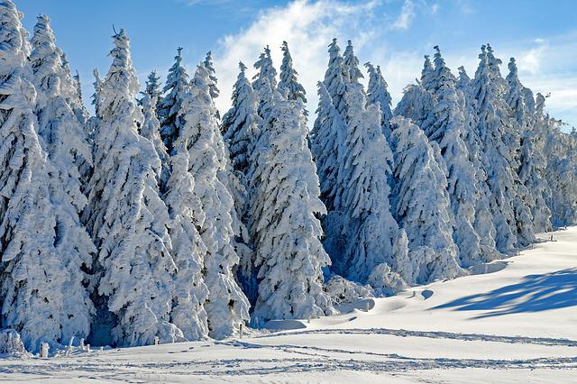 Wintry, Snow, Firs, Snowy, Season, Winter, Cold, Advent