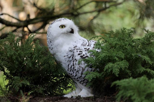 Owl, Zoo, Bird, Animal, Plumage, Tree, Snowy Owl