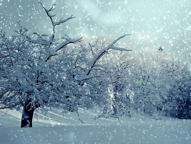 Trees, Snow, Winter, Wintry, Snowy, Snowfall