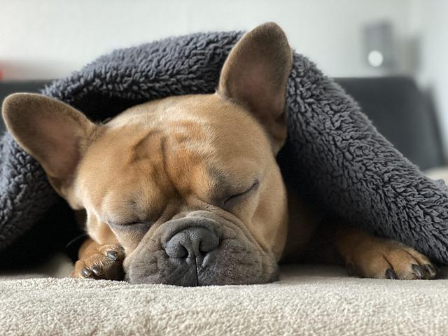 Snuggle, Dog, Kuscheldecke, Covered, December, Cold