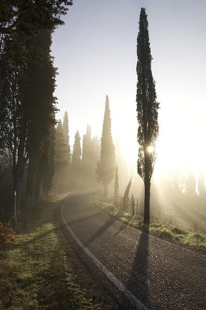 Cypress, Road, Fog, Sunset, Dawn, So, High, Tree