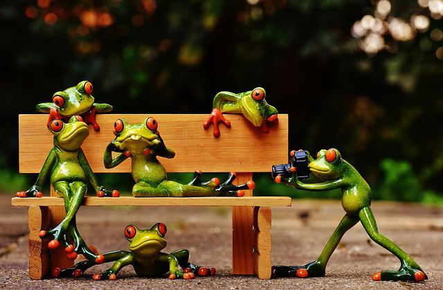 Frogs, Photographer, Sociable, Bank, Bench, Relaxed