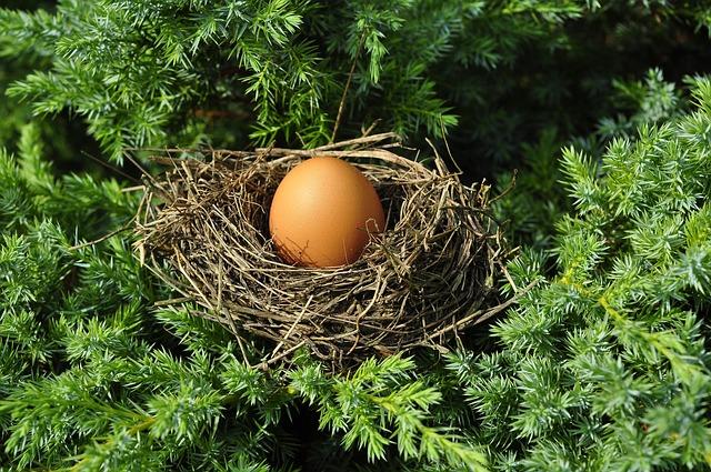 Egg, Socket, Full, Busy, Bird's Nest, Optimization