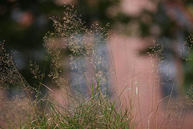 Grass, Soft, Diffuse, Bokeh, Tender, Blurry, Mood