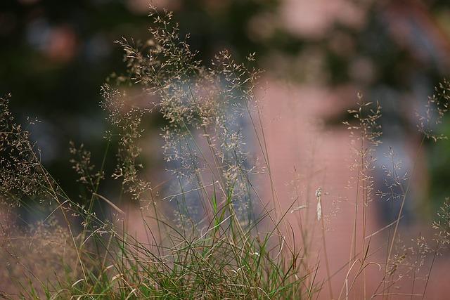 Grass, Soft, Diffuse, Bokeh, Tender, Blurry, Mood