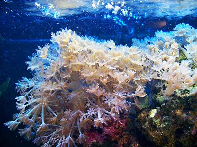 Soft Coral, Aquarium, Waving Hands, Glove Coral, Marine