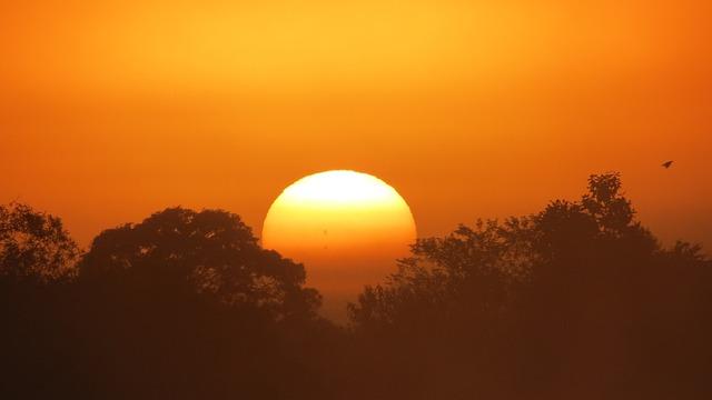 Swamp, Dawn, Day, Sol