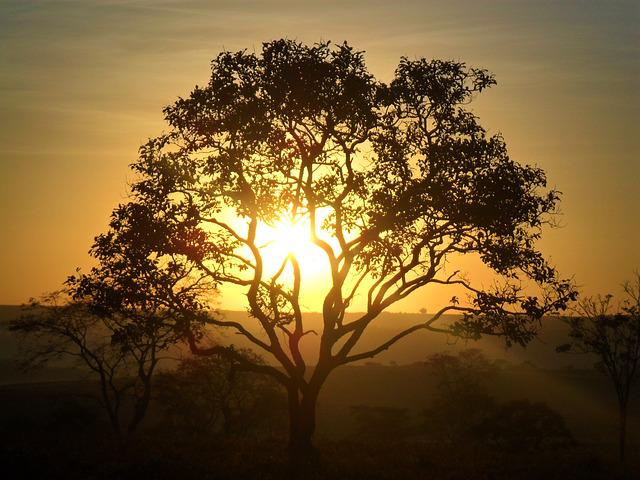 Tree, Dawn, Cerrado, Sol, Day, Large Tree, Landscape