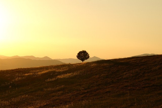 Tree, Solitary, Landscape, Umbria, Sunset, Calm, Quiet