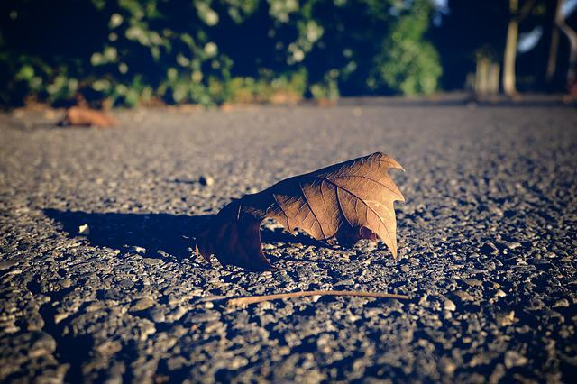 Nature, Outdoor, No Person, Leaf, Fall, Solitude