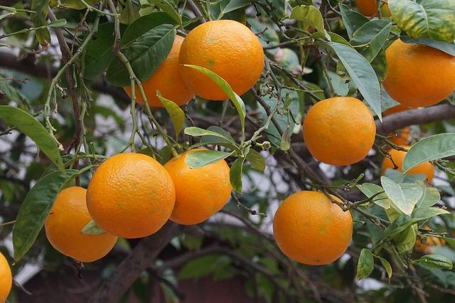 Mallorca, Fruit, Oranges, Sóller