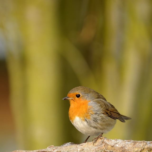 Animal World, Bird, Nature, Songbird, Robin, Garden