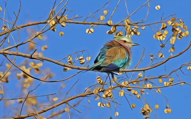 Bird, Songbird, Cute, Close, Animal, Animal World