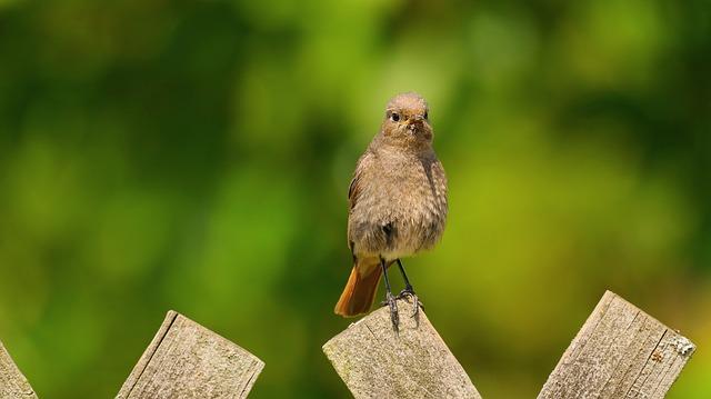 Sparrow, Sperling, Garden Bird, Bird, Animal, Songbird