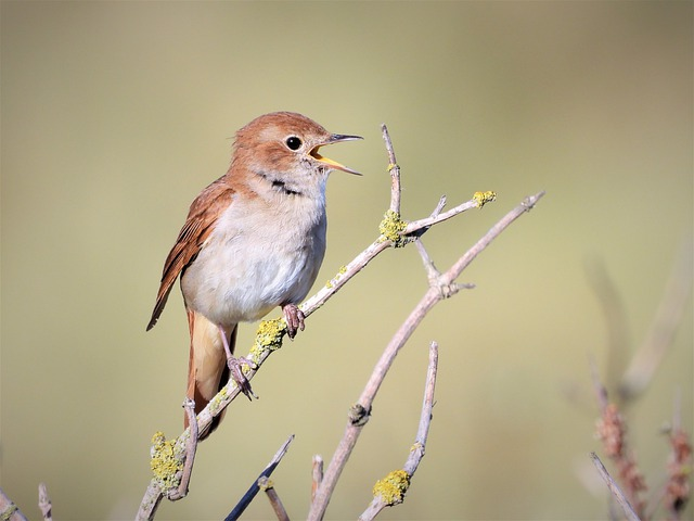 Wonderful, Songbird, Songs Of The Nightingale