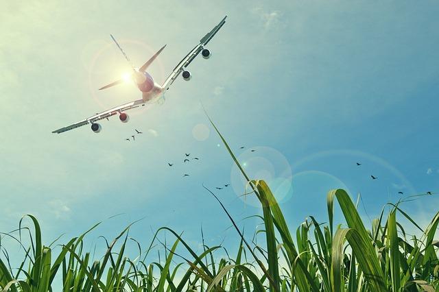 Aircraft, Flight, Sky, Grassland, Grass, Birds, Source