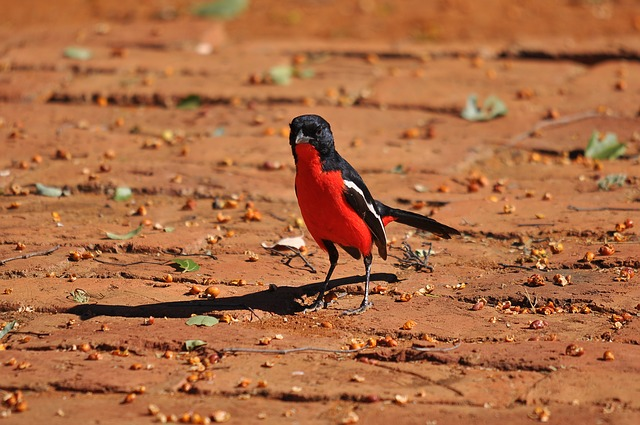 Wildlife, Outdoors, Nature, Bird, South Africa, Park