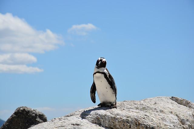 Penguin, Beach, South Africa, Water, Bay, Rock