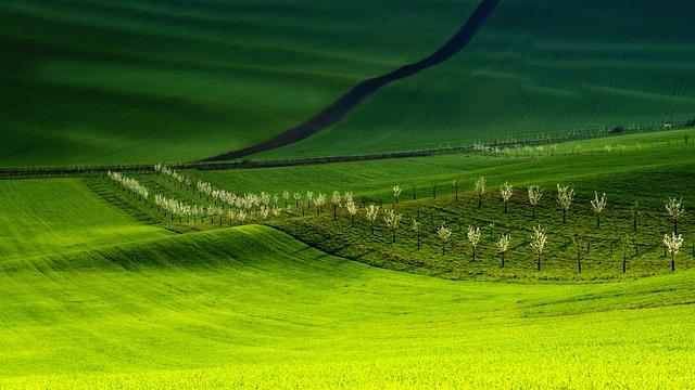 Moravia, South Moravia, Biozones, Waves, Meadows, Field