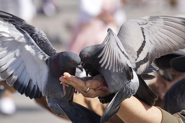 Pigeons, Feed, Hand, Flying, Space, Wing, Dove, City