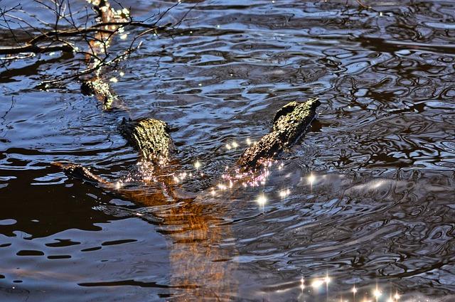 Water, Sun Glitter, Glitter, Sparkle, Sunlight, Surface