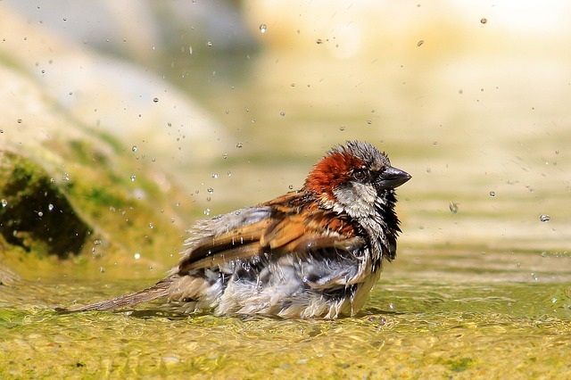 Sparrow, Bird, Bathroom, Shower, Birds Shower