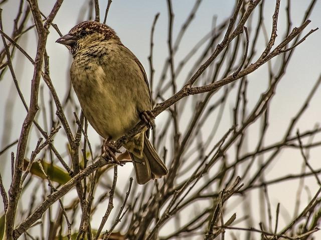 Sparrow, Branch, Tree, Nature, Wildlife, Bird, Animal