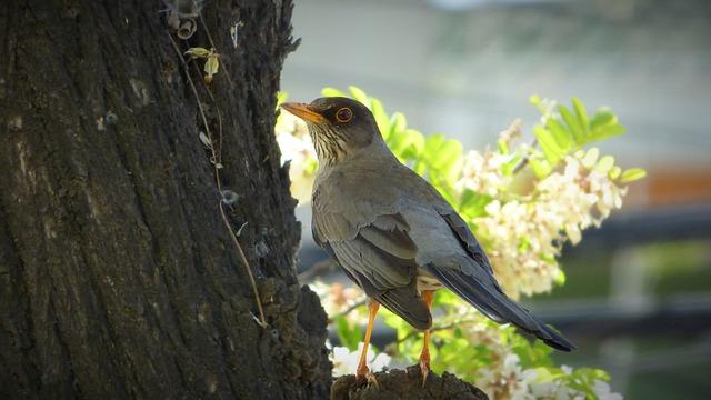 Bird, Ave, Animal, Feathers, Fauna, Tree, Sparrow