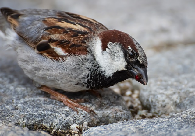 Sparrow, Bird, Sperling, Nature, Animal, Songbird