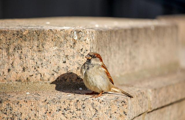 Nature, Bird, Sparrow, Wildlife, Animal