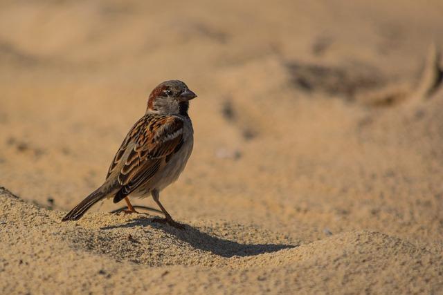 Sparrow, Nature, Wildlife, Animal, Bird, Sand, Cute