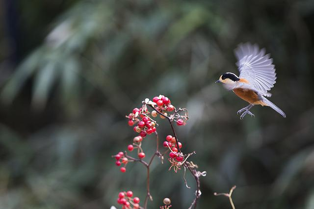 New, Varied Tit, Fruit, Nature, Animal, Sparrow