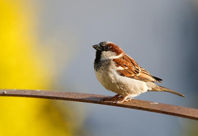 Sparrow, Bird, Animal, Perched, Wildlife, Songbird
