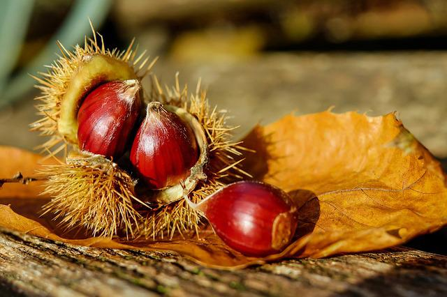 Chestnut, Chestnuts, Fruit, Brown, Edible, Specialty