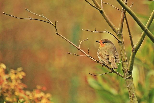 Robin, Bird, Animals, Songbird, Species, Close, Spring