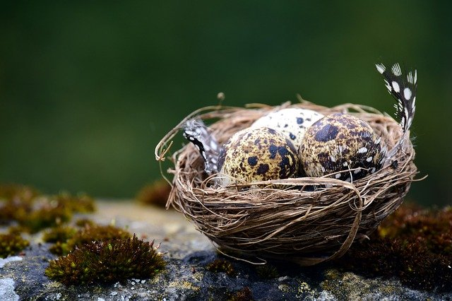 Nest, Bird's Nest, Bird Eggs, Speckled, Background