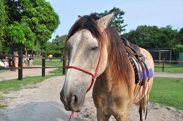 Horse, Mammal, Mount, Animal, Brown, Speed, Farm, Fauna