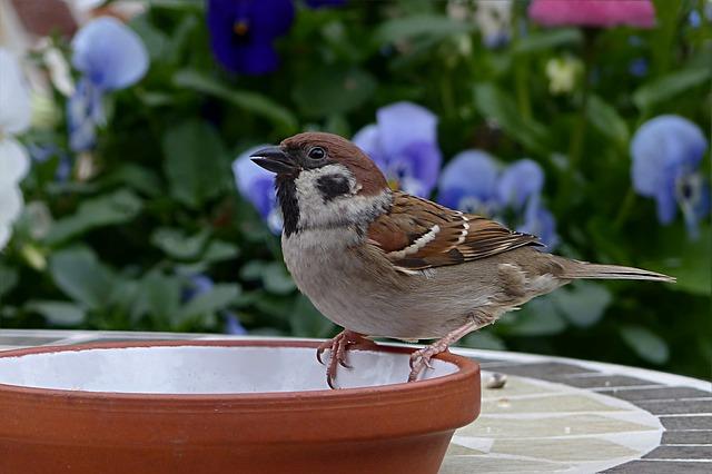 Bird, Sparrow, Sperling, Passer Domesticus, Foraging