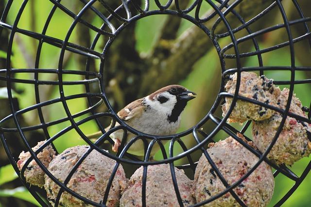 Sparrow, Sperling, Bird, Birdie, Plumage, Songbird